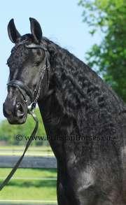caballo horsemarket erfahrungen