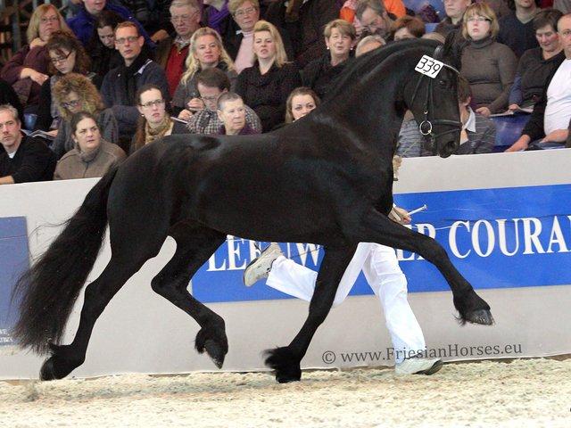 FriesianHorses eu - Friesian Horses for Sale - Welcome